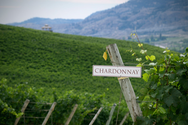 Varietal of the month chardonnay